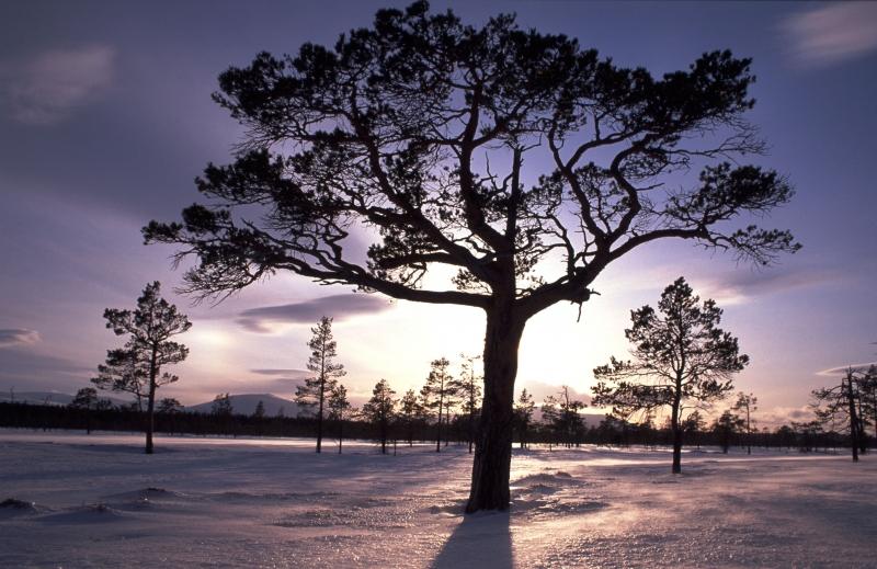 452804-winter